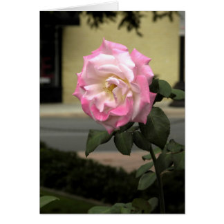 White and Pink Rose Card