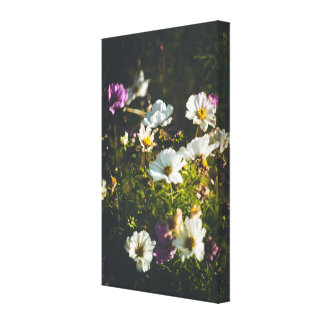 White and purple anemone flowers canvas print