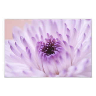 White and Purple Flower Photo