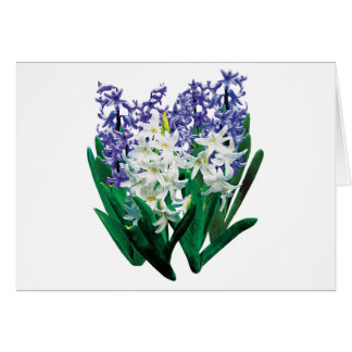 White and Purple Hyacinths Card