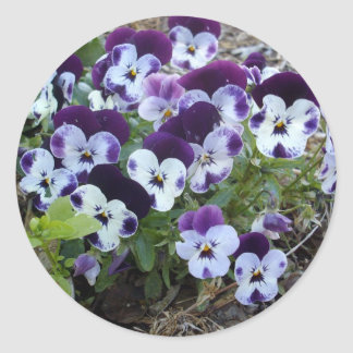 White And Purple Pansies, Classic Round Sticker