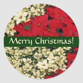 White and Red Poinsettias Christmas Sticker