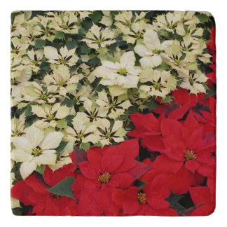 White and Red Poinsettias I Holiday Floral Trivet