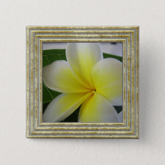 White And Yellow Frangipani Flower 2 Inch Square Button