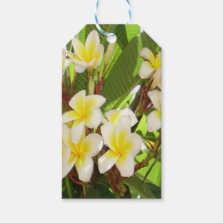 White and Yellow Frangipani Flowers with Leaves Gift Tags