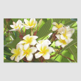 White and Yellow Frangipani Flowers with Leaves in