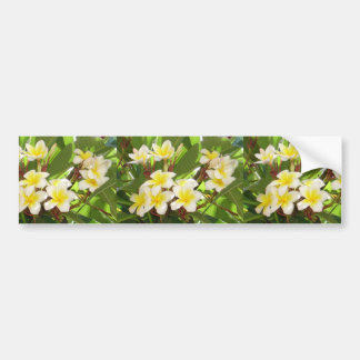 White and Yellow Frangipani Flowers with Leaves in Bumper Sticker