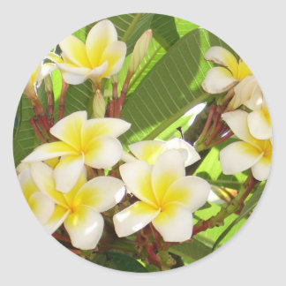 White and Yellow Frangipani Flowers with Leaves in Round Sticker