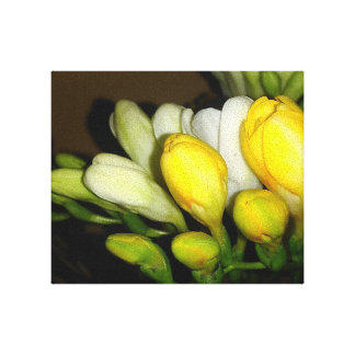 White And Yellow Freesia Flower Buds Canvas Print