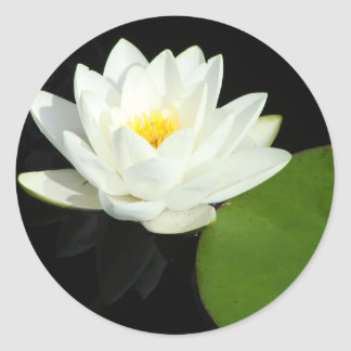 White and Yellow Lily in Pond Classic Round Sticker