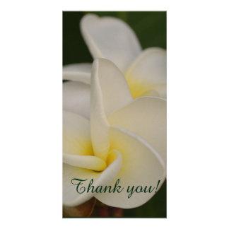 White and Yellow Plumeria Card