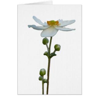 White Anemone 1 Card