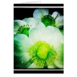 White Anemone Blank Greeting Card