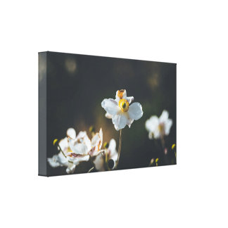 White anemone flowers canvas print