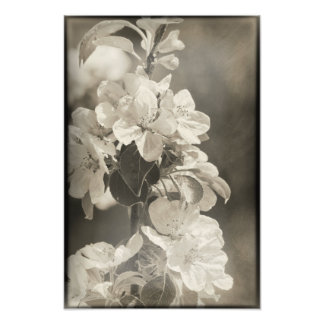 White Apple Blossom Flowers Rustic Floral Tree Photo Print