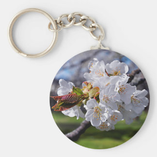 White apple blossoms in spring basic round button keychain
