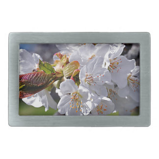 White apple blossoms in spring belt buckle