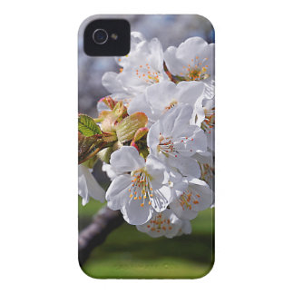 White apple blossoms in spring Case-Mate iPhone 4 case