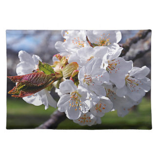 White apple blossoms in spring placemat