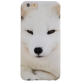White arctic fox barely there iPhone 6 plus case