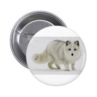 White Arctic Fox Blends Into The Snow 2 Inch Round Button