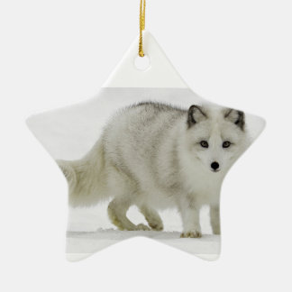 White Arctic Fox Blends Into The Snow Ceramic Star Ornament