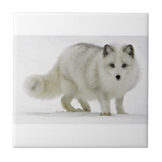 White Arctic Fox Blends Into The Snow Ceramic Tile