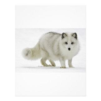 White Arctic Fox Blends Into The Snow Letterhead