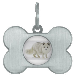 White Arctic Fox Blends Into The Snow Pet Tags