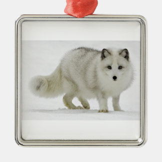 White Arctic Fox Blends Into The Snow Silver-Colored Square Ornament