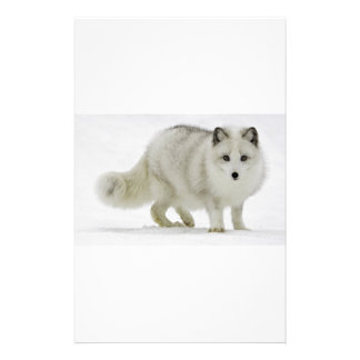 White Arctic Fox Blends Into The Snow Stationery