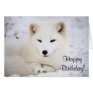 White arctic fox card