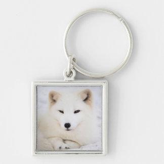 White arctic polar fox in snow keychain