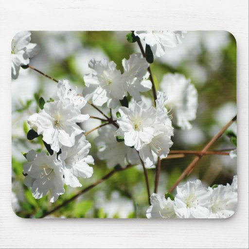 White Asters Mousepad