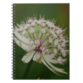 White Astrantia Notebook