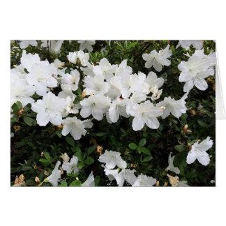 White Azalea Floral Greeting Card