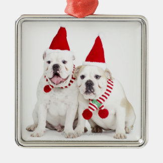 white background, white bulldogs, male dog, metal ornament