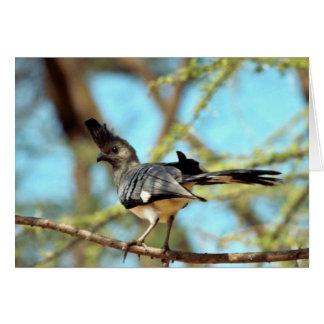 White-bellied Go Away Bird Card