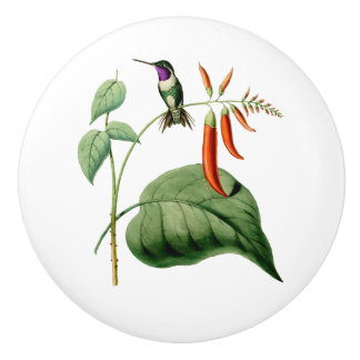 White Bellied Wood Star Hummingbird Ceramic Knob