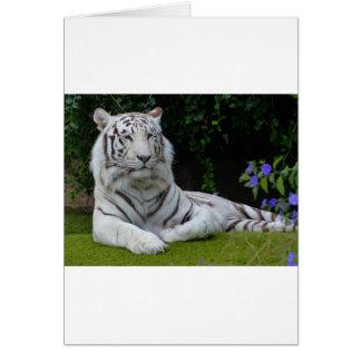White Bengal Beautiful Tiger Cat Resting Greeting Card