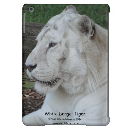 White Bengal Tiger Case For iPad Air