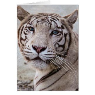 White Bengal Tiger Greeting Card
