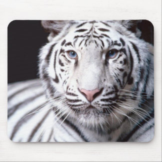 White Bengal Tiger Mousepad