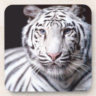 White Bengal Tiger Photography Coaster