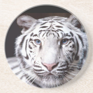 White Bengal Tiger Photography Drink Coaster