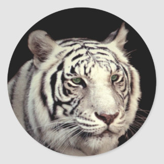 White Bengal Tiger Round Sticker