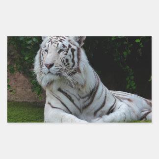 White Bengal Tiger Rectangular Sticker