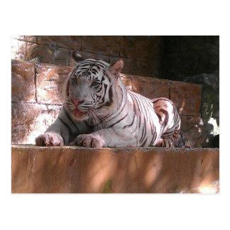 White Bengal Tiger, Trinidad Postcard