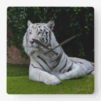 White Bengal Tiger Wallclock