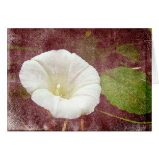 White Bindweed - The Wild Perennial Morning Glory Card
